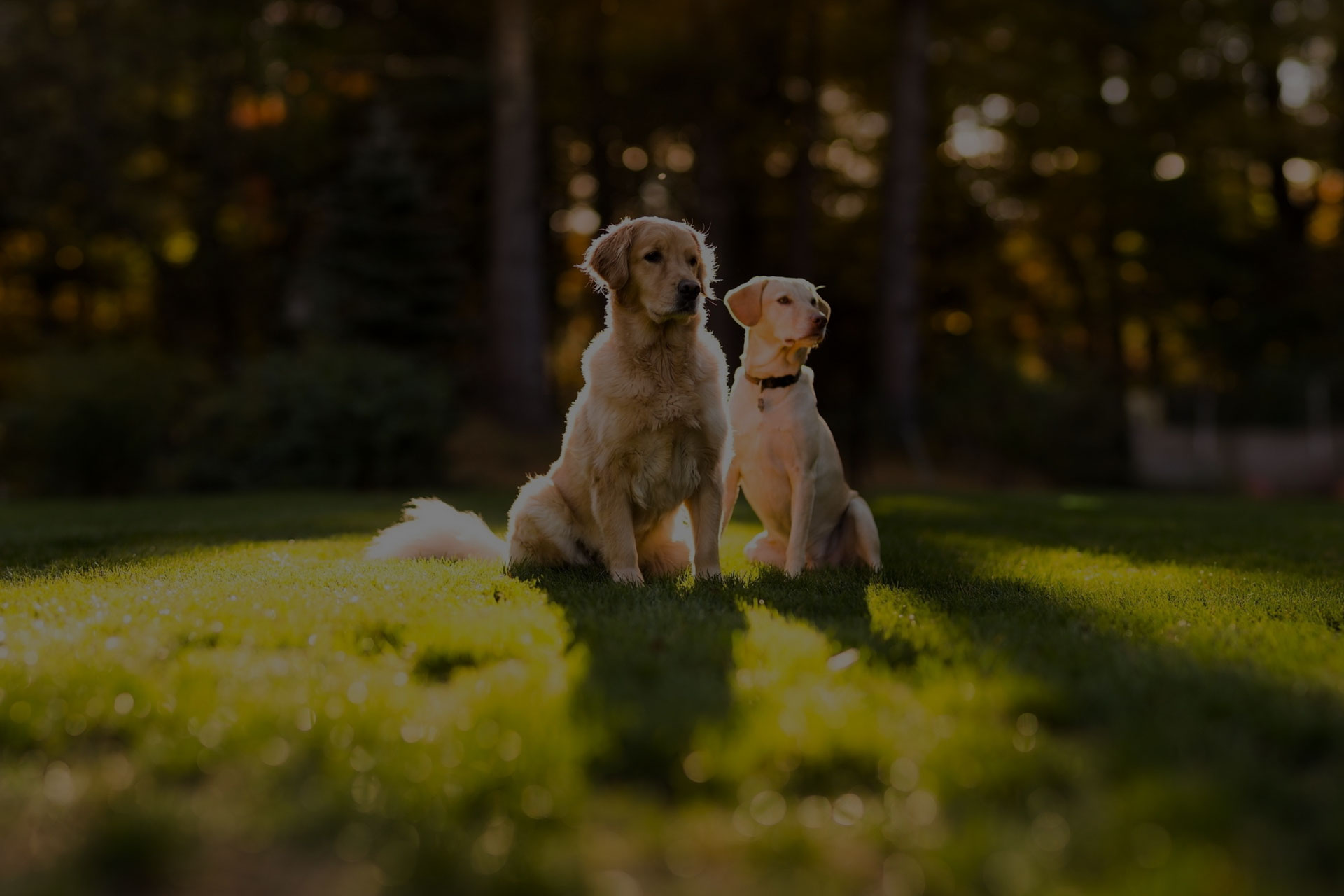 protrait dog photo with beautiful nature